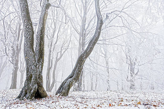 Frostbitten Forest by Evgeni Dinev