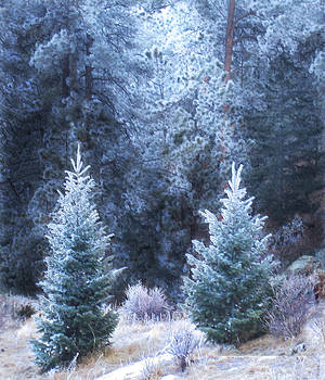 Frosty Firs by Ric Soulen