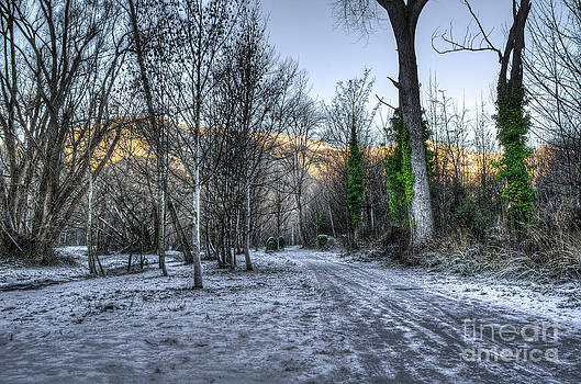 Frosty Forest Trail by Ian Rushton