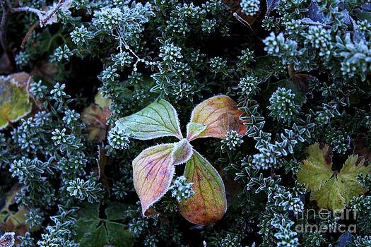 Frosty Morning by Theresa Willingham