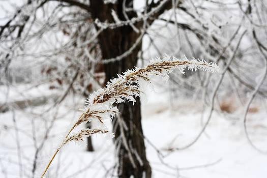Frozen Prairie by Justin Frederick