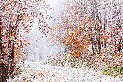 Frozen Road in Frosted Forest by Evgeni Dinev