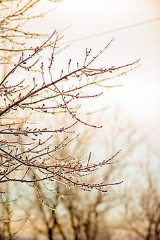 Frozen tree by Walter Barrera