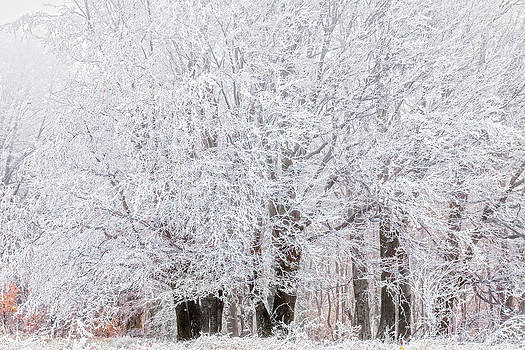 Frozen Trees by Evgeni Dinev
