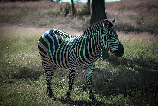 Fruit Stripes by Kelly Rader