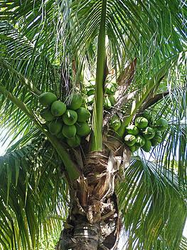 Fruits Of Samoa by Fredrik Ryden