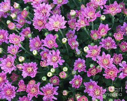 Full Bloom by Leeah Borner