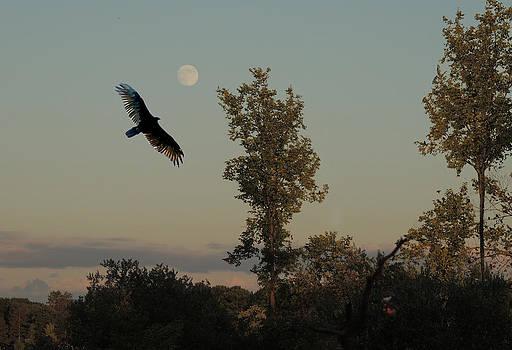 Amalia Jonas - Full Moon and a Hawk