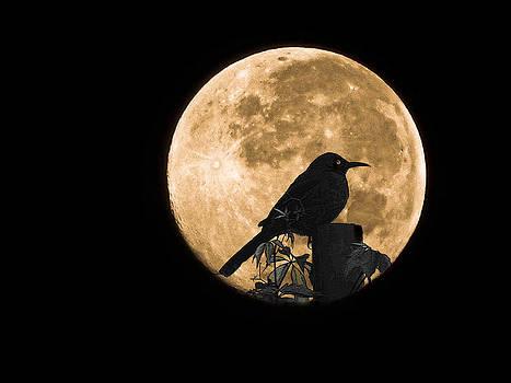 Full moon and bird by Jesus Nicolas Castanon