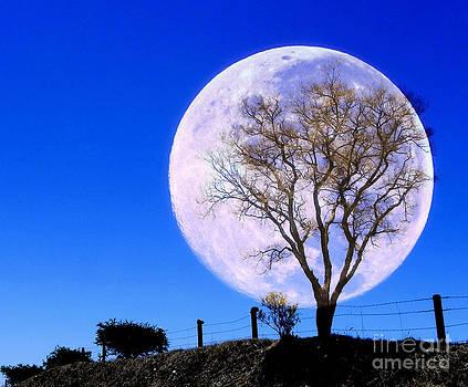 Full moon in the field by Jesus Nicolas Castanon