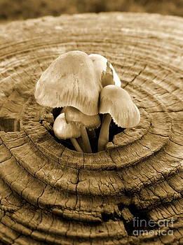 Fungi by Richard Heath