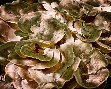 Fungus Swirl by Michael Putnam
