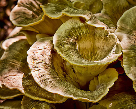 Fungus tunnel by Michael Putnam