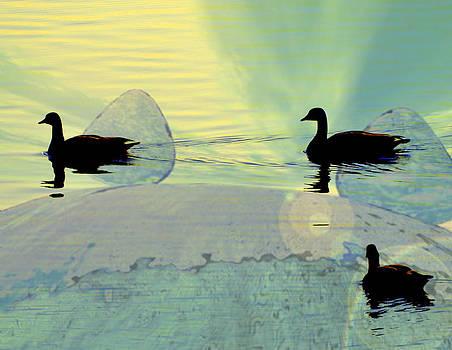 Marty Koch - Funky Ducks