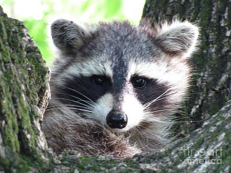 Furry Friend by Michele Bishop
