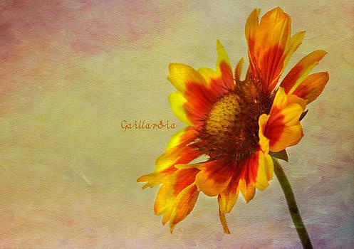 Gaillardia by Sandra Pledger