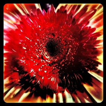 Galactic Floral  #cameraplus #picfx by S Michelle Reese