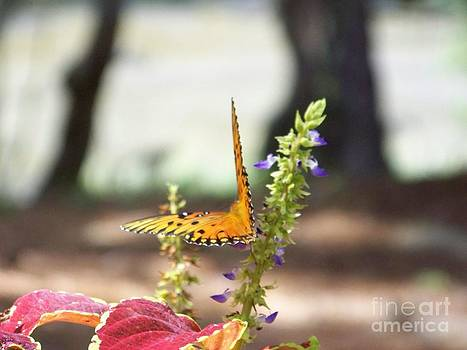 Garden Delight by Sandra Starling