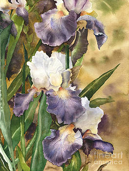 Garden of Irises by Laura Ramsey
