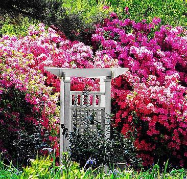 Garden Paradise by Pam Utton