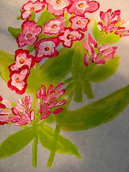 Garden Phlox by Amy Bradley