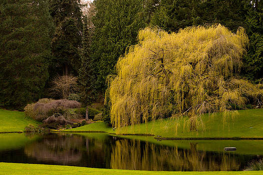 Garden Reflections by Benjamin Clark