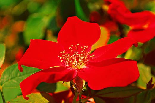 Michelle Cruz - Garden Romance