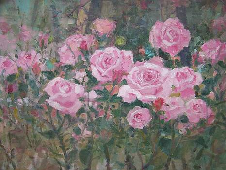 Garden roses by Bart DeCeglie