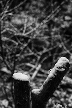 Garden Snow by Geoff Smith