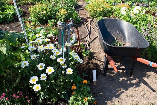 Garden Still Life by Stacey Lynn Payne
