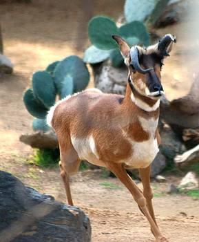 Gazelle lightness by Meeli Sonn