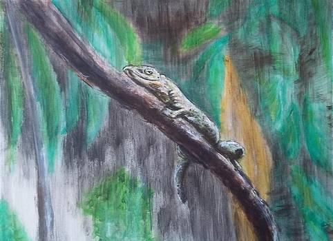 Gecko by John Fierro