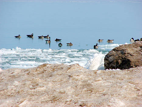 Geese at Spring Breakup by Bruce Ritchie