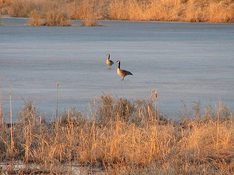 Geese on Frozen Pond by Victoria Sheldon
