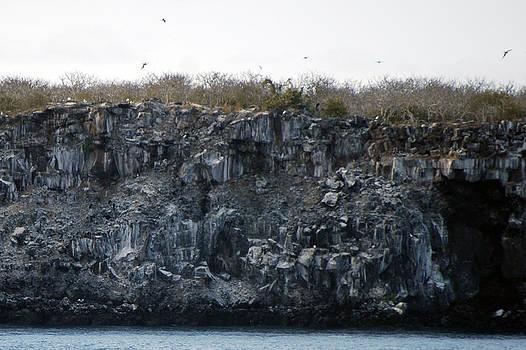 Harvey Barrison - Genovesa Island