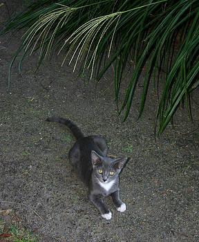 Nina Fosdick - Gentle Cat