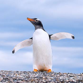 Gentoo Penguin by Konstantin Kalishko