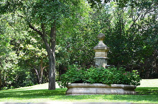 Geranium Garden by Kathy Lewis