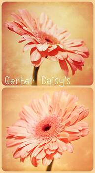 Gerber Daisy's Two by Cathie Tyler