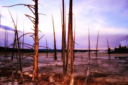 Geyser Basin Trees by Kelly Reber