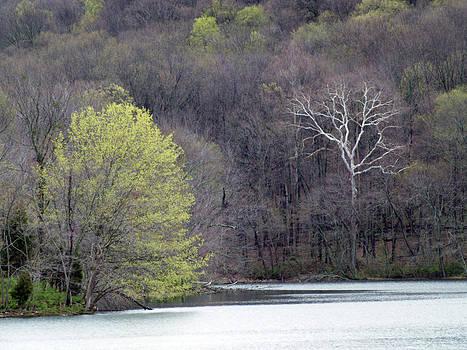 Ghost Tree - 1 by Randy Muir