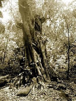 Ghost Tree by Sara Hamilton