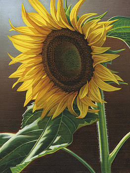 Giant Sunflower by Steven Tetlow
