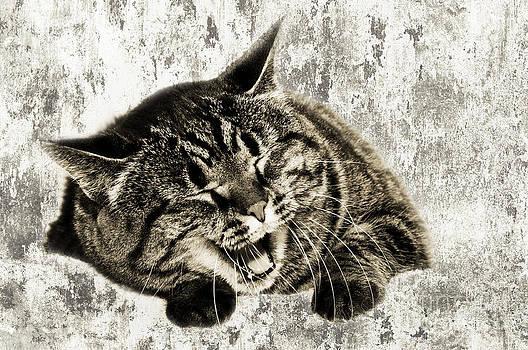 Andee Design - Giggle Kitty