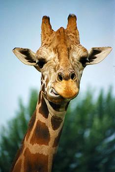 Giraffe by CJ Clark