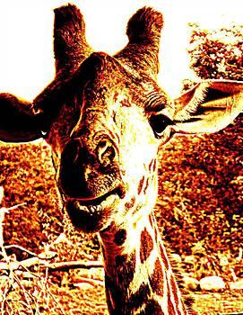 Giraffe Curiosity by Andrea Dale