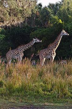 Jason Blalock - Giraffe