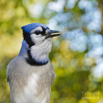 Give me more peanuts by Christine Kapler