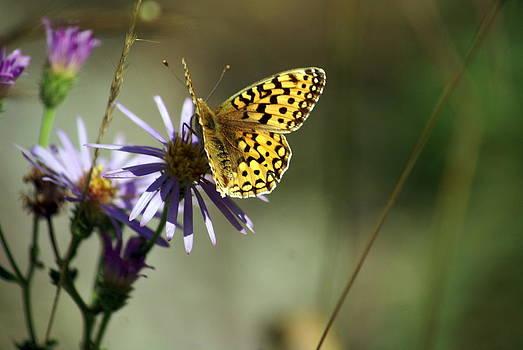 Marty Koch - Glacier Butterfly