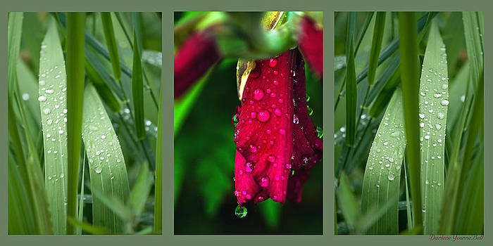 Darlene Bell - Gladiolus In The Rain Triptych